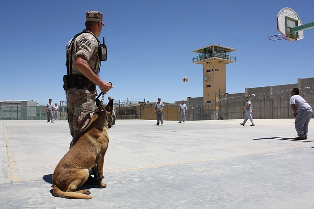Agent de sécurité ou maître-chien, comment choisir?